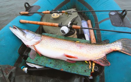 Big pike lies in an inflatable boat. tackle and fish close-up. Multiplier and spinning.