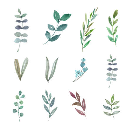 Set of watercolor foliage, hand-drawn illustration of elements isolated white background.