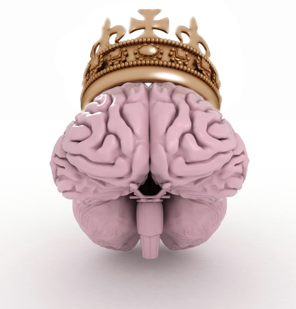 cerebra: brain with crown on a white background