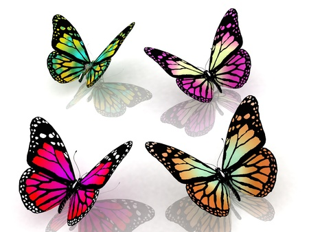 aerials: butterflies on a white background