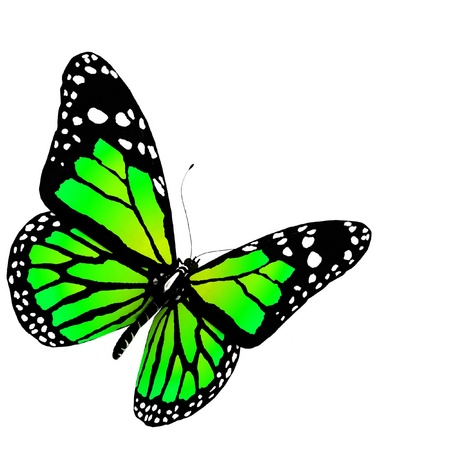 aerials: butterflies of green color on a white background