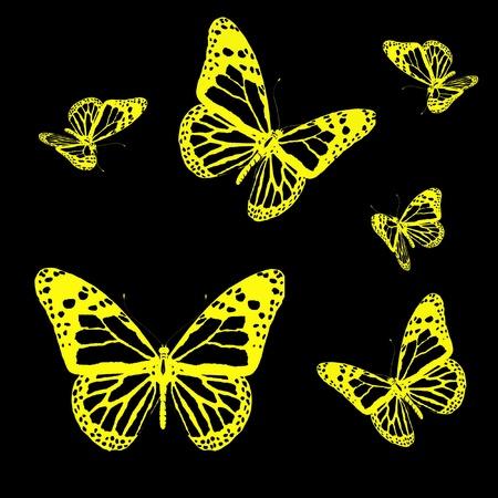 aerials: butterflies on a black background
