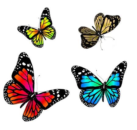 mariposas volando: mariposas sobre un fondo blanco