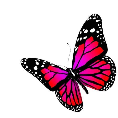 De vlinder van de karmozijnrode kleur