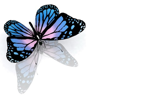 aerials: the butterfly on a white background Stock Photo