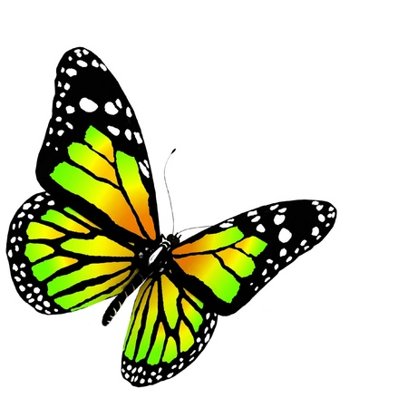 femme papillon: papillon 3d rendre sur fond blanc