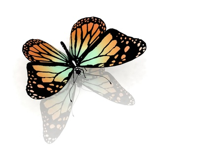 aerials: Isolated butterfly on a white background Stock Photo