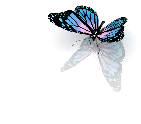 butterflies flying: Isolated butterfly on a white background Stock Photo