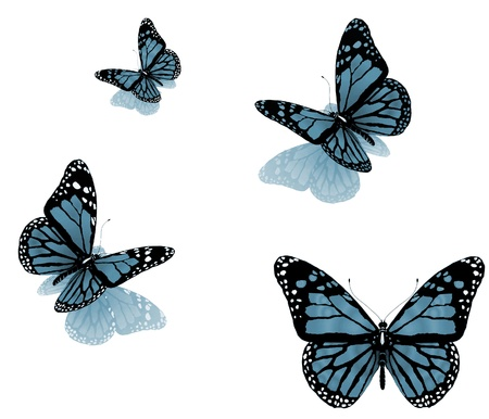 butterflies flying: butterflies on a white background