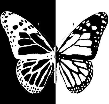 aerials: silhouette of butterfly on a black and white background Stock Photo