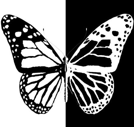 aerials: silhouette of butterfly on a black and white background