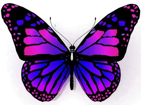 白い背景で隔離された蝶
