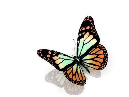 Isolated butterfly on a white background Stock Photo - 12113352