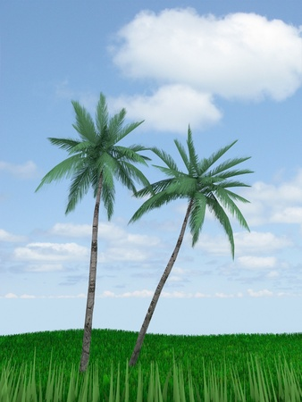 palm trees against the sky photo