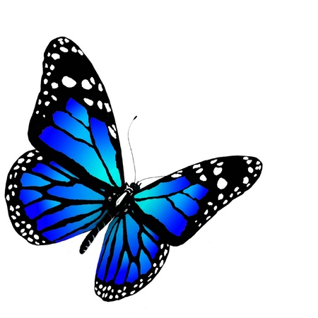 aerials: Isolated butterfly of blue color on a white background Stock Photo