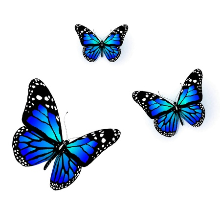 aerials: Three butterflies of blue color on a white background Stock Photo