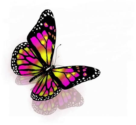mariposas volando: Aislado de la mariposa de color brillante sobre un fondo blanco