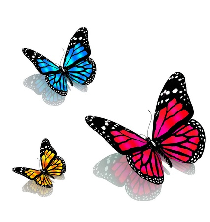 three butterflies on a white background photo