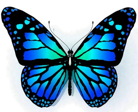 3d image: Isolated butterfly  of blue color on a white background Stock Photo
