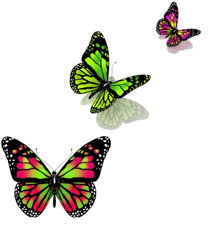 aerials: three butterflies on a white background Stock Photo
