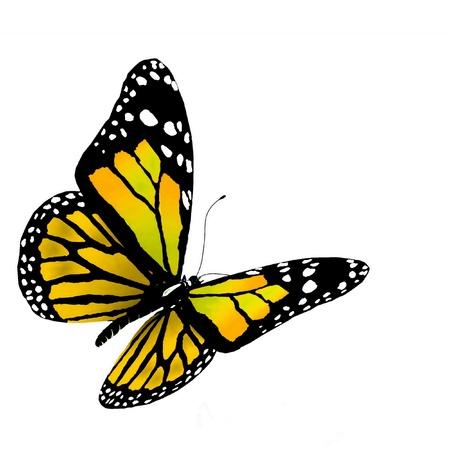 緑の色の蝶