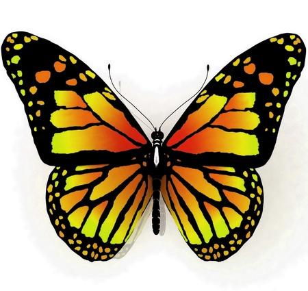 白地に青の色の分離の蝶 写真素材