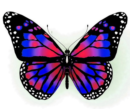 aerials: Isolated butterfly  of bright color on a white background
