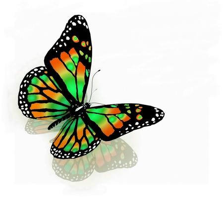 白い背景の上の緑の色の分離の蝶