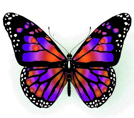 Isolated butterfly  of bright color on a white background photo