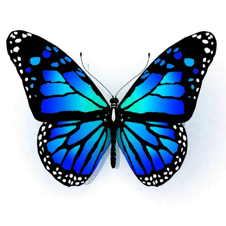 Isolated butterfly  on a white background Stock Photo - 12800670