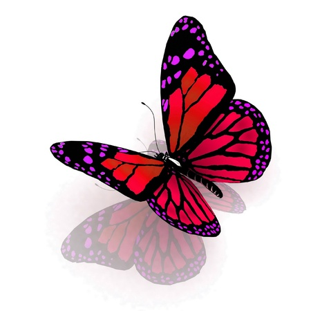 Isolated butterfly  on a white background Stock Photo