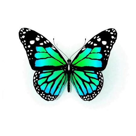 白い背景に分離の蝶