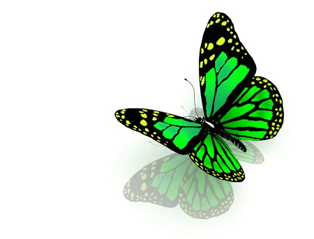 aerials: The butterfly of green color Stock Photo