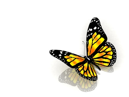 aerials: The butterfly isolated on white background