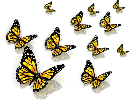 aerials: The butterflies of yellow color  Stock Photo
