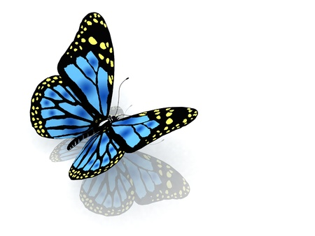 aerials: The butterfly of blue color Stock Photo