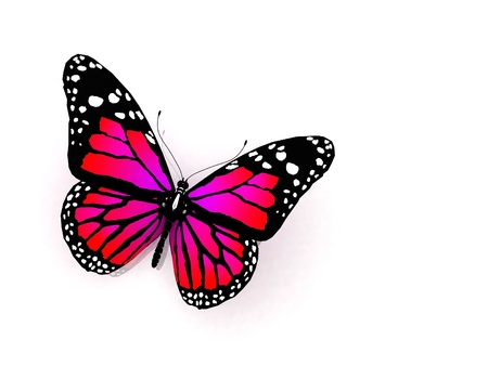 aerials: The butterfly of crimson color