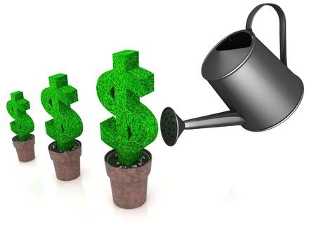 fertilizing: sign of dollar, growing in a flowerpot