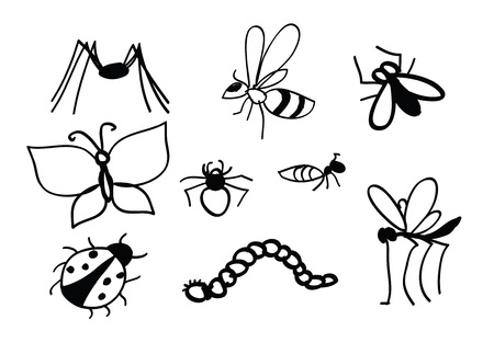 gnat: Set of vector insects. Insects set. Insect Collection of gnat, ant, fly, bee, mosquito, beetle, ladybug, spider . Insect isolated on white background.