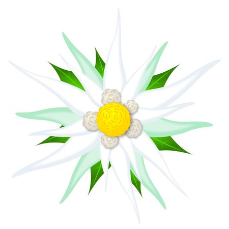 Oktoberfest flower - edelweiss