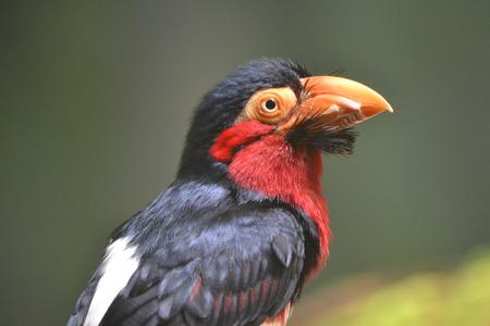 Exotic bird with orange beak