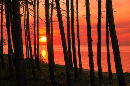 Sunset - sun reflecting in sea ocean, trees forest