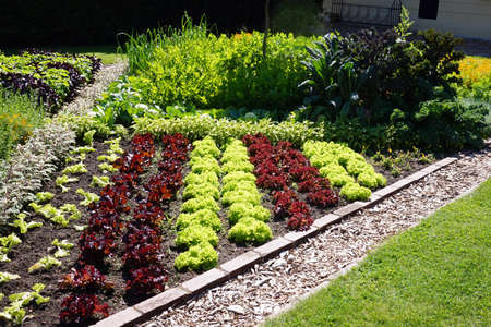 Flowerbed, decorative plants, grass