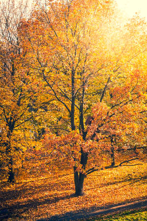 Park with orange and yellow leaves on trees - fall foliage