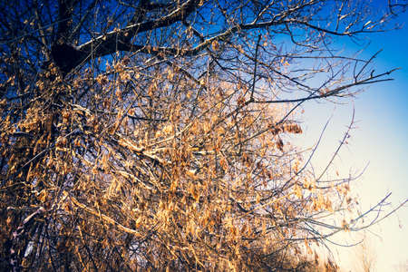 Tree branches covered with snow in winter