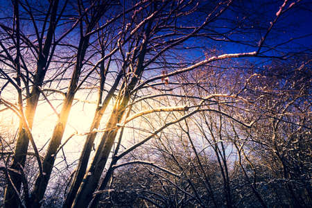 Tree branches covered with snow, sunshine - winter
