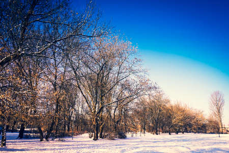 Trees in park covered with snow in winter