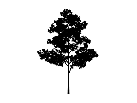 black contour tree maple on white background Stock Photo