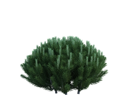 Nice tree fir on white background Banque d'images