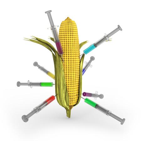 maize: GM maize